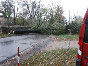 Baum umgestürzt Sturm